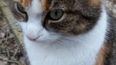 Lily als bewaakster van de energie van ons tuintje