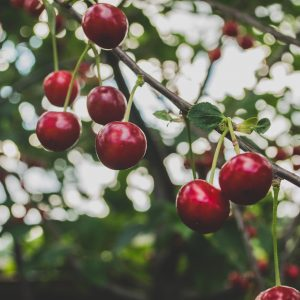 de onlogica van de niet-eetbare tuin